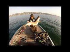 Conseil pêche aux poissons Blanc et Carnassiers