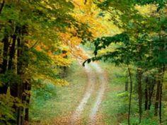 Agnaldo Timóteo - Os Verdes Campos da Minha Terra