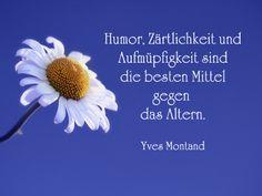 Blumenbild mit Spruch von Yves Montand