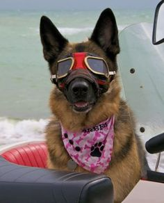 "Dog goggles     (shall we call them ""doggles""?)"