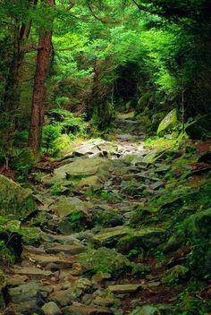 Caminhos na Floresta...