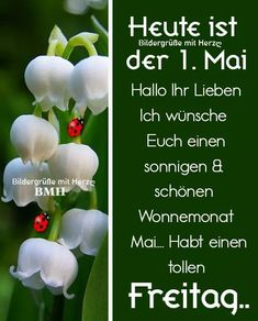 1. Mai, Plants, Wallpapers, Party, Good Morning Wishes, Morning Sayings, Monthly Pictures, Pentecost, Wallpaper