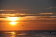 Seagull on sunset. Ronce les bains, août 2012