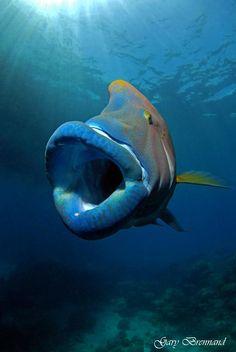 sea life - sea life photography - sea life underwater - sea life artwork - sea life watercolor sea l Beautiful Sea Creatures, Deep Sea Creatures, Underwater Creatures, Underwater Life, Planeta Animal, Fauna Marina, Life Under The Sea, Beautiful Fish, Sea Fish