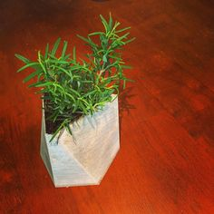 Something we liked from Instagram! T-Glase Planter. #tglase #planter #rosemary #3dmodeling #3dprinting #3dprinter #lulzbot #herbs #taz4 #plants #inventor #loft #angles #geometric by emilyin3d check us out: http://bit.ly/1KyLetq