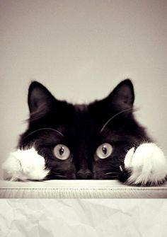 =^.^=   Paws, gato, Gato preto e branco, cat black and withe