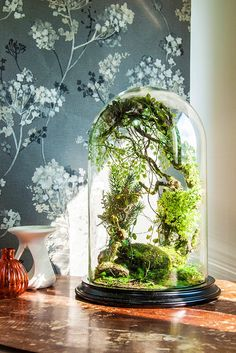 Enchanting is one way to describe this terrarium. Forest of curiosity is another.