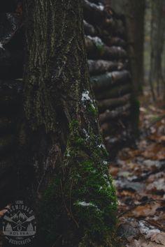 _MG_0633 copy Bushcraft, Plants, Plant, Planets, Camping Survival