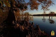 1000+ images about Arkansas Travel on Pinterest