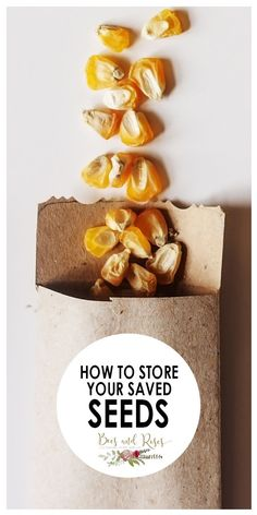 storing saved seeds is not as easy as one might imagine. There are a lot of factors to consider when storing seeds, temperature, light, and moisture are just a few. Learn here how to store your saved seeds.