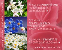 Facial Tissue, Floral, Personal Care, Real Love, Margaritas, The Creation, Art, Self Care, Flowers