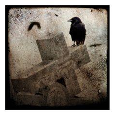 Gothic Home Decor Raven Blackbird Corvus Raven Photo by gothicrow, $16.00