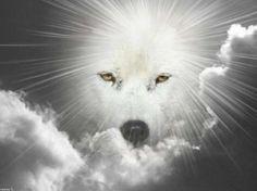FANTASY WOLF   Black & White Wolf Fantasy - animal, fantasy, abstract, wolf, black ...