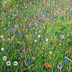 Oil pantings by Sussex artist, James Lightfoot Oil Painting On Canvas, Wild Flowers, Paintings, France, Artist, Plants, Painting Art, Painting, Flora