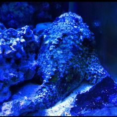 Aquariums on Pinterest Aquarium, Reef Aquarium and The Aquarium