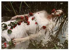 Картинки по запросу wild rose kylie