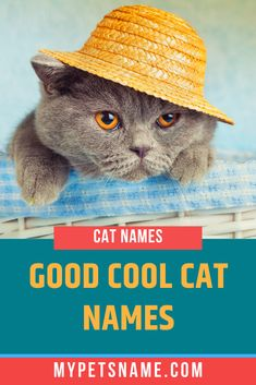 Trying choose from cool cat names for your new kitty? This article will give you every possible name, with over 200 perfect names to fit whatever personali Cool Pet Names, Cat Names, Cat Breeds, Cool Cats, Fur Babies, Kitten, Traditional, Cool Stuff, Pets