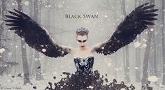 ... , the black swan can be distinguished by its much longer neck and slower wing beat.
