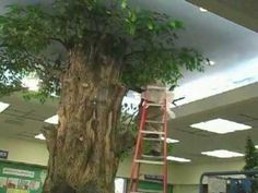 Watch as Ryan's Reading Tree is assembled in the Children's room at the Modesto Library
