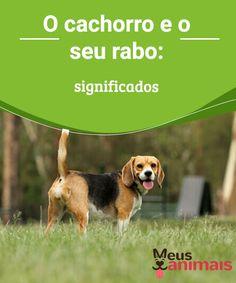 O cachorro e o seu rabo: significados   Curto, longo, pequeno, enrolado… Assim pode ser o #rabo do #cachorro e com diferentes #significados. Você sabe por que seu cachorro balança o rabo? #Curiosidades