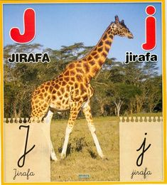 Material educativo para maestros: Abecedario con imagenes reales Animals, Board, Index Cards, Activities, Illustrations, Animais, Animales, Animaux