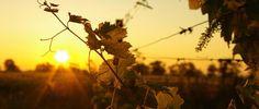 vinos viterico