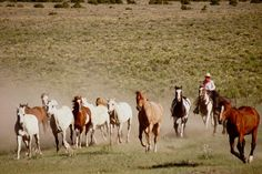 Running horses for the artist gathering at Zapata Ranch. #ZapataRanch