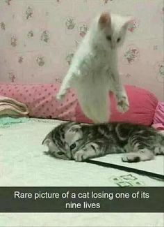 Cat losing one of his 9 lives