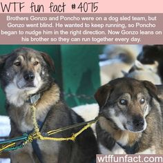 WTF Facts : funny, interesting & weird facts via @KaufmannsPuppy