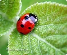 Top natural pest control methods for a healthy garden
