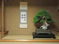Árbol de 800 años en Shunka-en, por Kunio Kobayashi