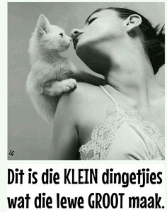 Afrikaans, Motivational, Movie Posters, Deep, Friends, Cats, Gatos, Amigos, Film Poster