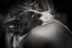 O site do The Kennel Club divulgou as fotos que foram eleitas as melhores da competição de fotógrafo de cachorro do ano de...