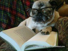 Belle's Bookshelf: Bookish Fun: Dogs Reading Books