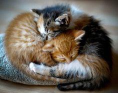 ⭐ Cat nap