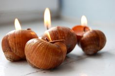 Snails Shell Candle Handmade Ecofriendly Reusable by LessCandles, $10.00