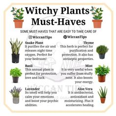 Wicca Do you grow plants at your home? I'd love to have a big garden one day but for the moment I ju Magic Herbs, Herbal Magic, Plant Magic, Green Witchcraft, Wiccan Witch, Magick, Wiccan Spells, Witchcraft Herbs, Pagan Yule