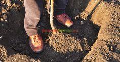 5. Tasarea pământului în jurul rădăcinilor Birkenstock Boston Clog, Plant