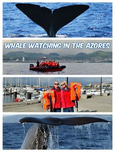 The Azores is one of the best places in the world for whale watching, with a strong cultural connection to whales. http://luggageandlipstick.com/whales-dolphins-azores/