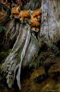 Fox litter-so cute! Nature Animals, Animals And Pets, Baby Animals, Cute Animals, Wild Animals, Beautiful Creatures, Animals Beautiful, Photo Animaliere, Mundo Animal