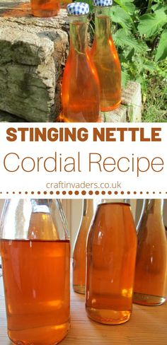 Nettles are a nutritious and versatile wild food. Here we make a delicious Stinging Nettle Cordial, one of my favourite nettle recipes. Subsistence Agriculture, Nettle Recipes, Smoothie Recipes, Smoothies, Cordial Recipe, Beverages, Drinks, Raising Chickens, Grain Free