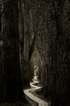 spooky path love... Fairy tale rule number eleventeen: always choose the road that looks the most horrible, because it's the 'nice' path that'll kill ya.