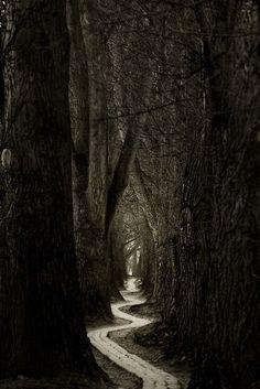 #paths #trees