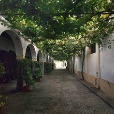 #climbing #vine #street #fundador #domecq #jerez #jerezdelafrontera. #Calle de las #parras en #bodega fundador