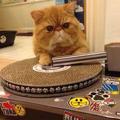 DJ Tuna!