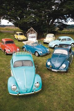 Loads of VW beetles CarFlash\ It looks like a herd of bugs moving toward the person with the feed bag:)
