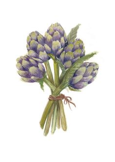 Hey, I found this really awesome Etsy listing at https://www.etsy.com/listing/159995486/artichoke-bouquet-art-print-from-my