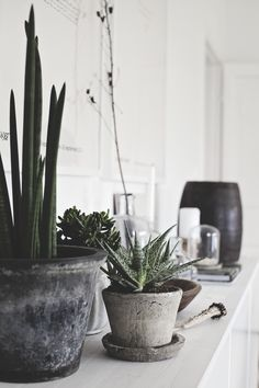 Love this collection of concrete style pots and succulents/cacti