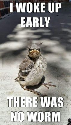 Funny pictures Good morning - The early bird catches the worm - Tier Witze - Lustige Tiere - humor Funny Animal Quotes, Animal Jokes, Funny Animal Pictures, Cute Funny Animals, Funny Cute, Bird Pictures, Funny Pics, Animal Sayings, Animal Captions