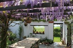 This is a photo I made on 24th April last year in my own garden in Belgium. Here the star of Spring is the wisteria on the pergola. You can see more on my blog : http://a-little-bit-of-paradise.over-blog.com/